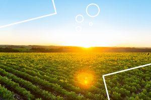 fazenda orgânica